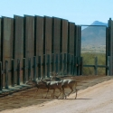 deer-at-wall